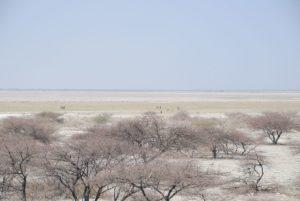 Makgadikgadi_Basin_-_Botswana_-_panoramio